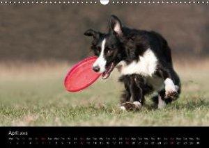 Border Collies - UK Version (Wall Calendar 2015 DIN A3 Landscape