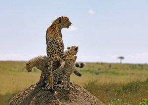 Serengeti 3D/2D BD