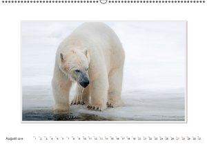 Emotionale Momente: Der Eisbär. / CH-Version (Wandkalender 2016