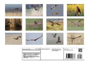 Harriers - Birds of Prey (Poster Book DIN A4 Landscape)