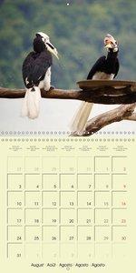 Oriental Pied Hornbills (Wall Calendar 2015 300 × 300 mm Square)