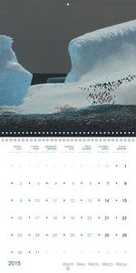 Penguins, Seals & Icebergs by Dieter Brecheis (Wall Calendar 201