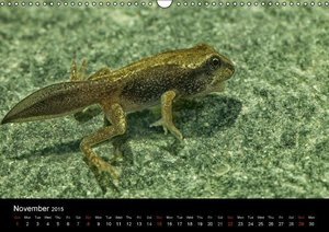 The Common Frog Collection (Wall Calendar 2015 DIN A3 Landscape)
