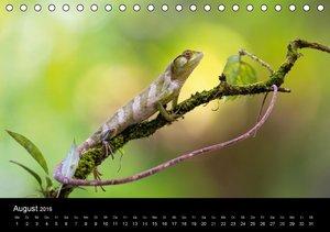 Costa Rica - Tiere des Regenwaldes (Tischkalender 2016 DIN A5 qu