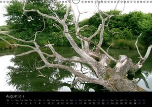 extraordinary trees (UK Version) (Wall Calendar 2015 DIN A3 Land