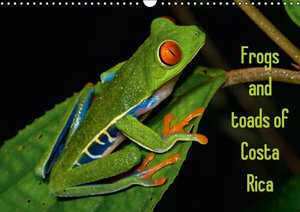 Frogs and toads of Costa Rica / UK-version (Wall Calendar 2015 D