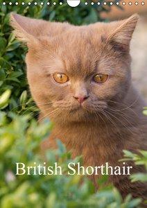 British Shorthair (Wall Calendar 2015 DIN A4 Portrait)