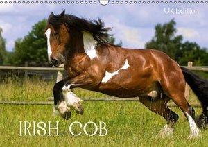 Irish Cob (Wall Calendar 2015 DIN A3 Landscape)