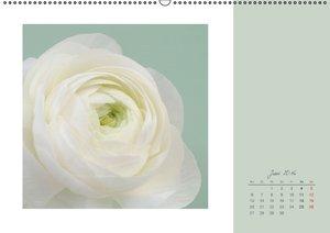 Blütenträume (Wandkalender 2016 DIN A2 quer)