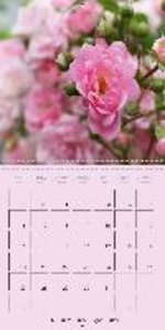 The Rose - Queen of Flowers (Wall Calendar 2015 300 × 300 mm Squ