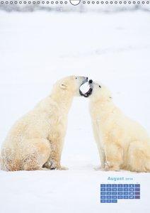 Eiszeit für Eisbären (Wandkalender 2016 DIN A3 hoch)