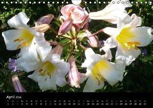 Lilien - Die Stars im Garten (Wandkalender 2016 DIN A4 quer)