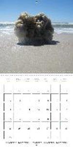 Amrum Island (Wall Calendar 2015 300 × 300 mm Square)