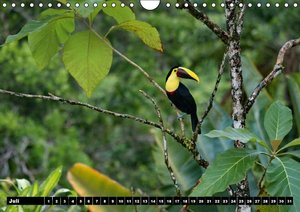 Faszinierende Vogelwelt Costa Ricas (Wandkalender immerwährend D