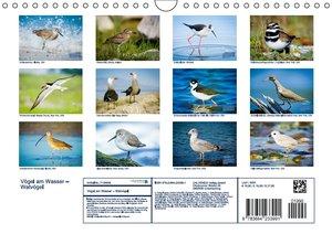 Vögel am Wasser - Watvögel (Wandkalender 2016 DIN A4 quer)