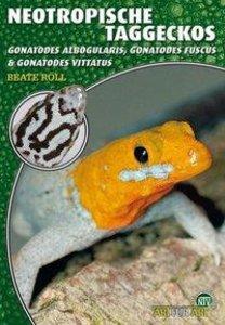 Neotropische Taggeckos