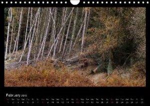 Scottish Woodlands (Wall Calendar 2015 DIN A4 Landscape)