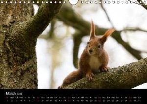 Squirrels. Curious, cute, funny. (Wall Calendar 2015 DIN A4 Land