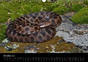Dummermuth, S: Fascination Vipers / UK-Version