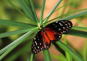 Tropische Momente - Exotische Schmetterlinge (Tischaufsteller DI