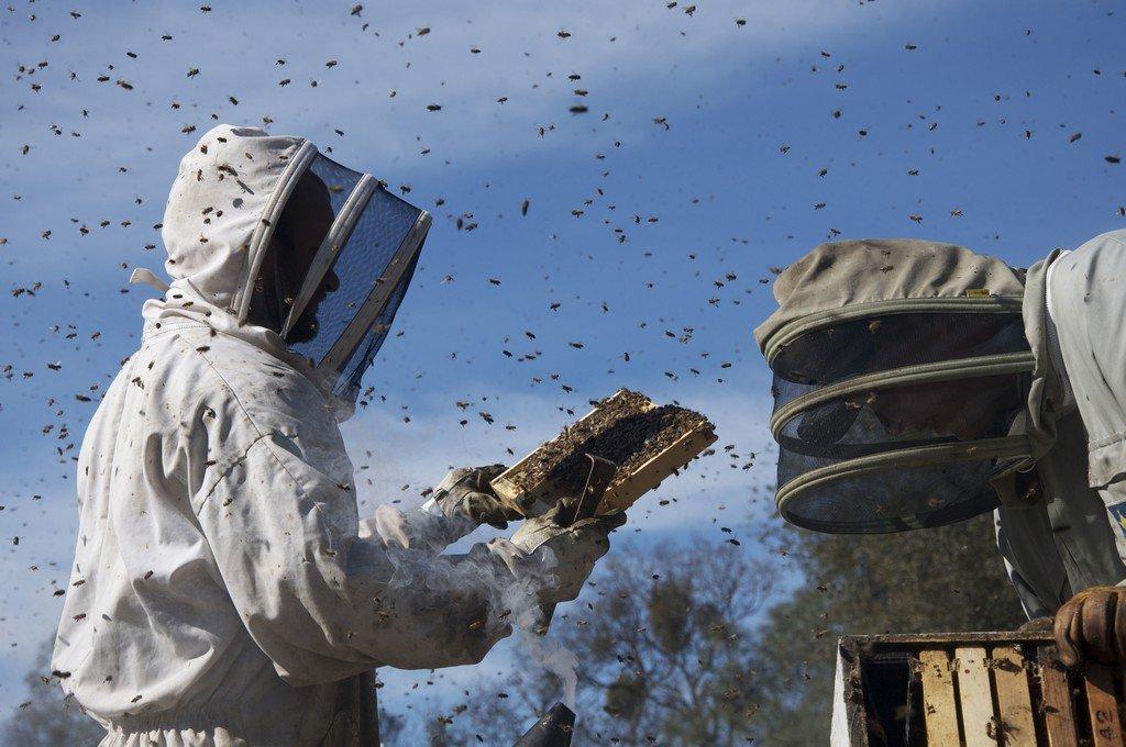 More than honey BD - zum Schließen ins Bild klicken