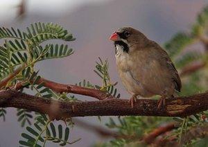 Afrikanische Vogelwelten (Posterbuch DIN A4 quer)