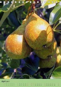Verlockende Früchte