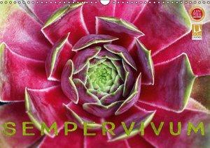Sempervivum - Hauswurz