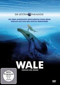 Wale: Könige der Meere
