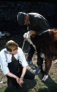 Der Doktor und das liebe Vieh - Staffel 3