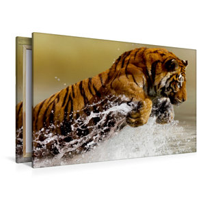 Premium Textil-Leinwand 120 cm x 80 cm quer Tiger lieben das Was