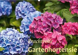 Prachtvolle Gartenhortensie