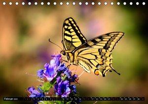 Bunte Pracht der Schmetterlinge