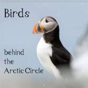 Birds behind the Arctic Circle (Wall Calendar 2015 300 × 300 mm