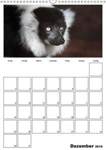 Der affige Terminplaner (Wandkalender 2019 DIN A3 hoch)
