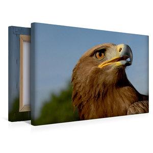 Premium Textil-Leinwand 45 cm x 30 cm quer Steinadler