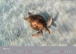 Karibische Meeresschildkröten