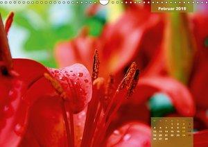 Zauberblüte - Asiatische Lilie