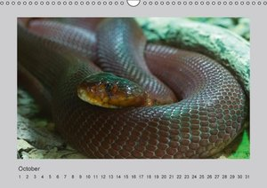 World of Snakes - UK Version (Wall Calendar perpetual DIN A3 Lan