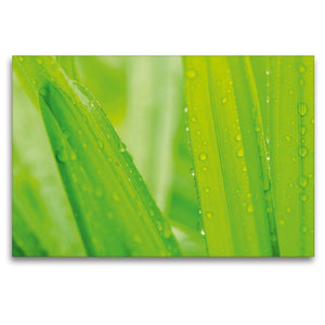 Premium Textil-Leinwand 120 cm x 80 cm quer Palmen im Regen