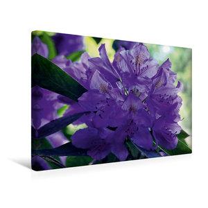 Premium Textil-Leinwand 45 cm x 30 cm quer Lilaner Rhododendron