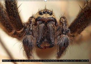 Faszination Makrofotografie: Spinnen (Wandkalender 2018 DIN A2 q