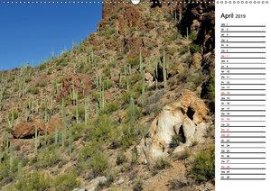 Flora und Fauna der Sonora Wüste (Wandkalender 2019 DIN A2 quer)