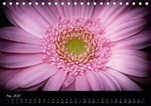 Serenade - Visuelle Musik der Blumen