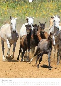 Caballos - Die schönen Pferde Spaniens