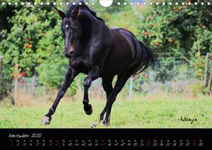Pferde - wundervolle Geschöpfe
