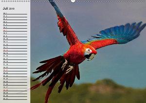 Papageien. Bunt, laut und klug (Wandkalender 2019 DIN A2 quer)