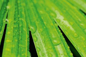 Premium Textil-Leinwand 45 cm x 30 cm quer Regentropfen auf Palm