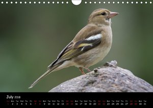 Popular garden birds of the united kingdom