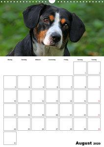 Entlebucher Sennenhunde begleiten Sie durch das Jahr